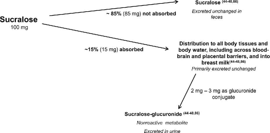 absorption-disposition-metabolism-and-excretion-of-sucralose_the-health-sciences-academy_alejandra-alex-ruani